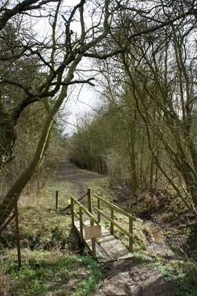 Footpath at Bourne Woods, Bourne